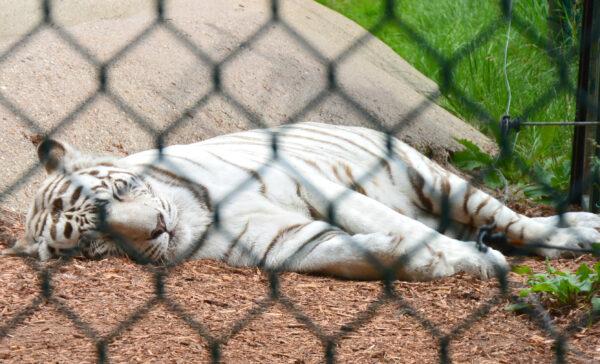 York Zoo 5