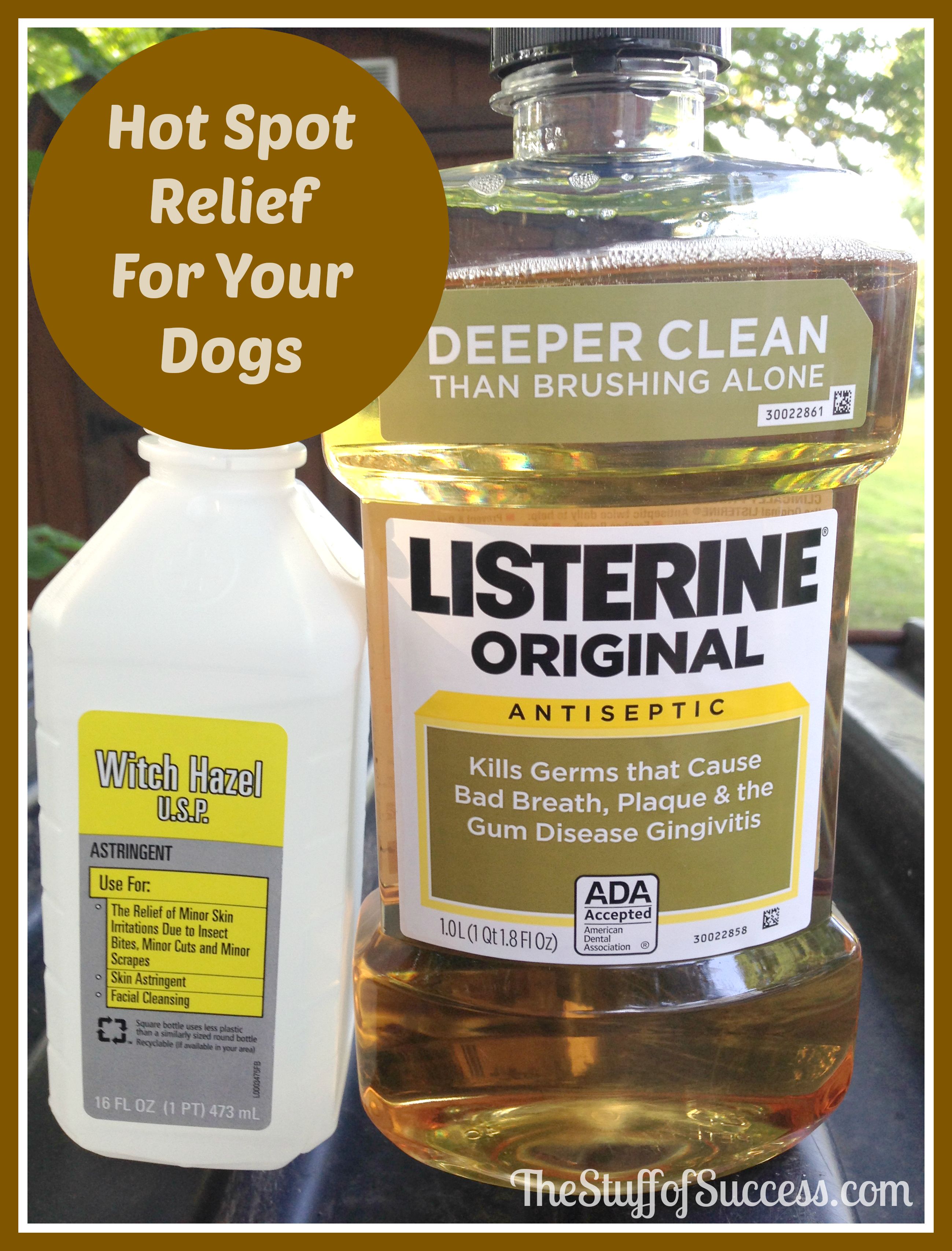 Home Remedy Dog Hot Spot Treatment