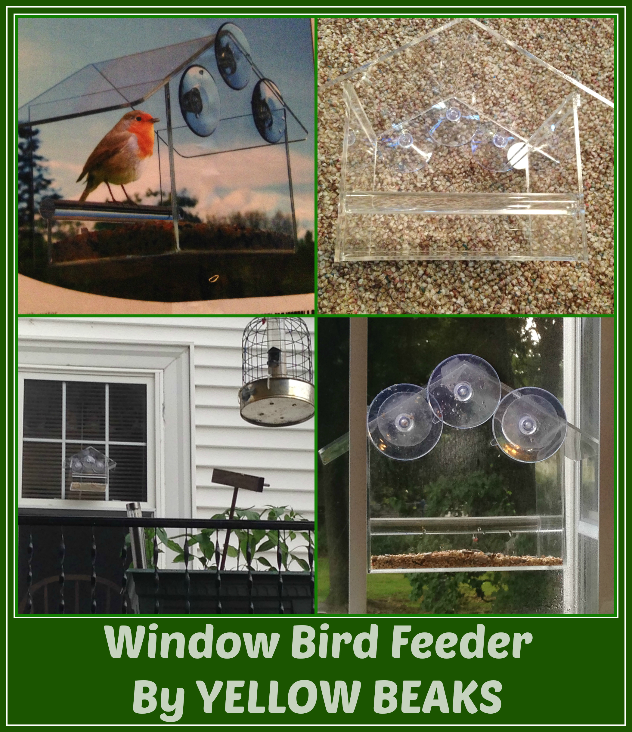 window bird feeder by yellow beaks