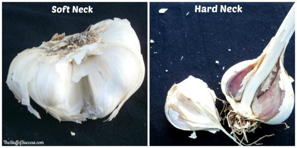 garlictypes1
