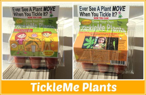 tickle me plants