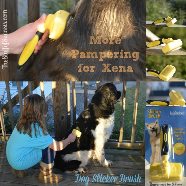 More Pampering For Xena With the Dog Slicker Brush