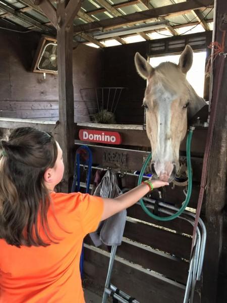 Dreamcatcher Horse Ranch Rescue Center Domino
