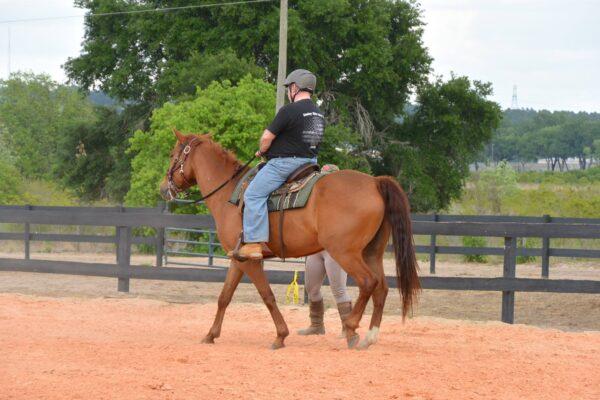 Dreamcatcher Horse Ranch Rescue Center Herules