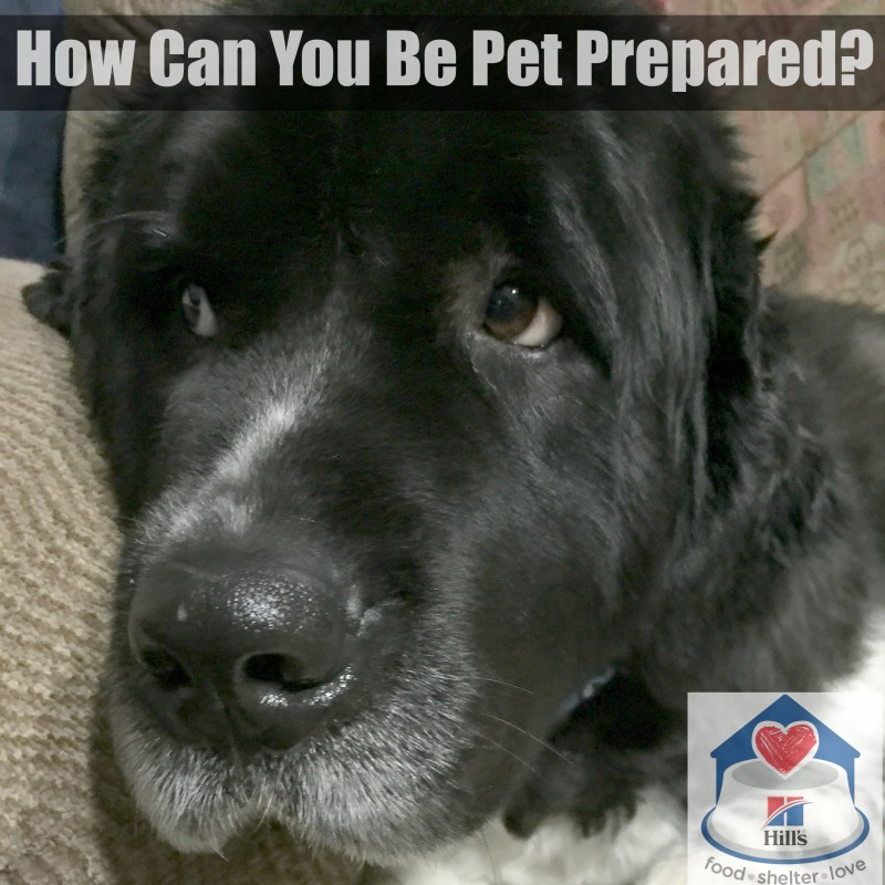 How Can You Be #PetPrepared? Don't Miss These Disaster Preparedness Tips! @HillsPet #ad