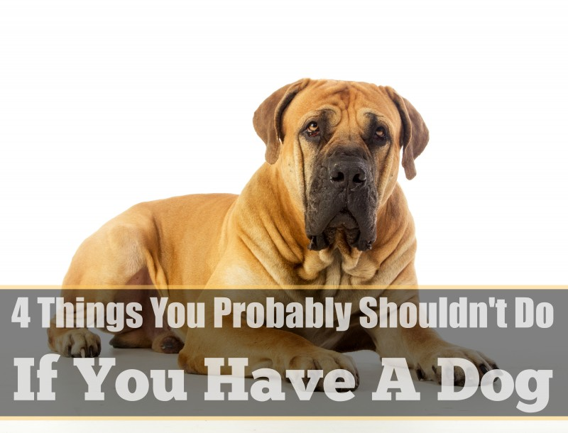 4 Things You Probably Shouldn't Do If You Have A Dog