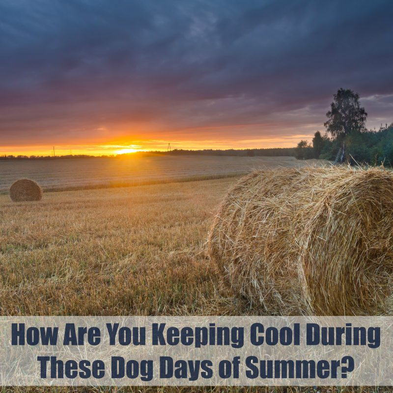 How Are You Keeping Cool During These Dog Days of Summer? #HouseExperts