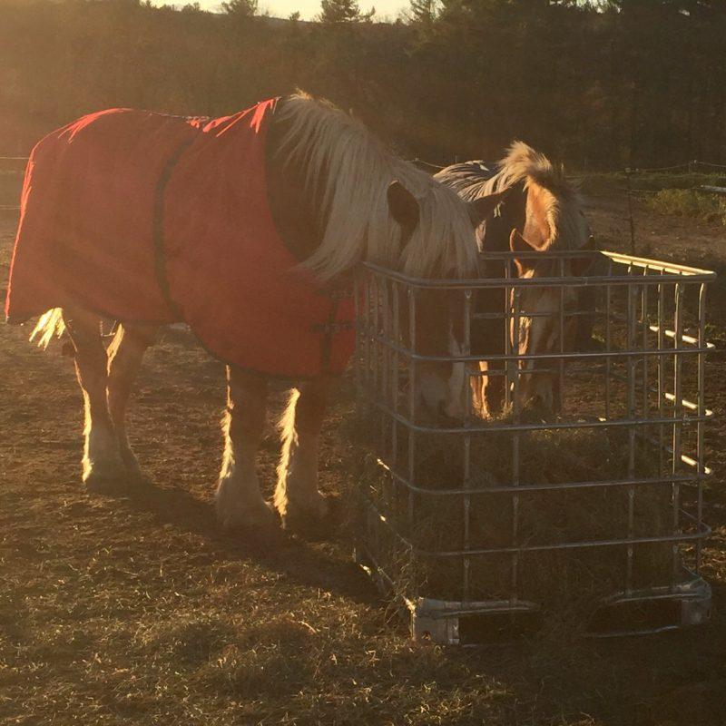 belgian-horses-hay-basket