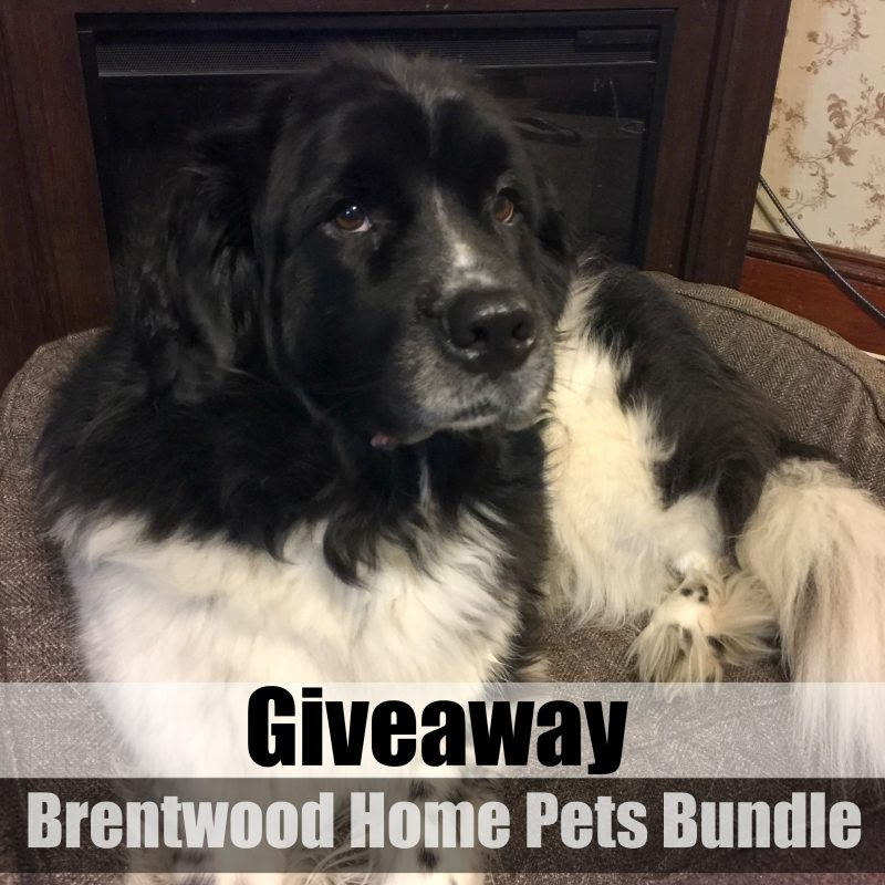 brentwood-home-pets-bundle