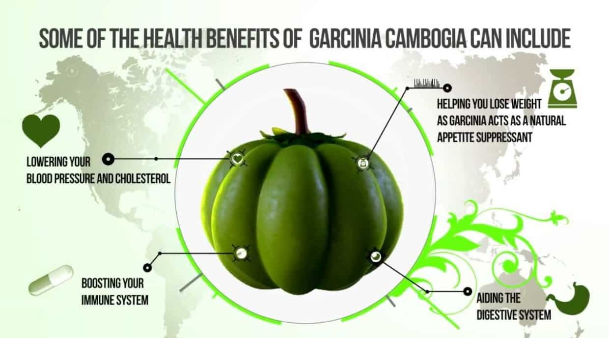 Garcinia Cambogia Supplement Facts And Effects The Stuff Of