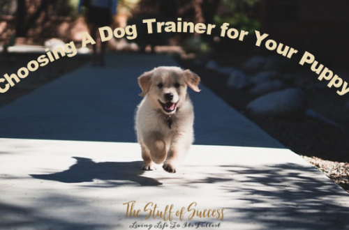 What You Need to Know When Choosing A Dog Trainer for Your Puppy