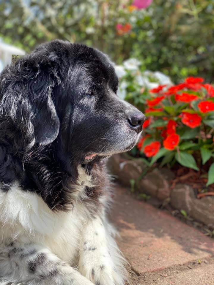 7 Things to Consider When Getting A Pet